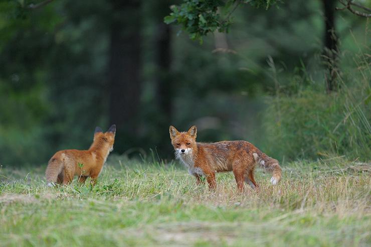 fox3_org
