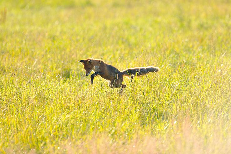 fox4_org