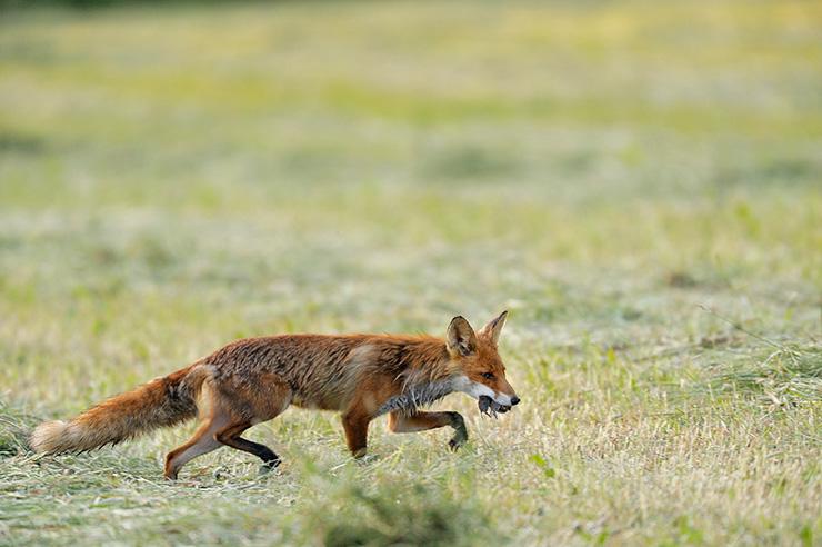 fox5_org